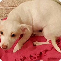 Adopt A Pet :: Penny's Shy Guy - Las Vegas, NV