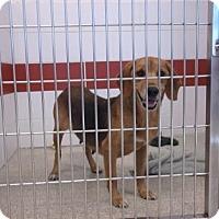 Adopt A Pet :: TUTTI - Gloucester, VA