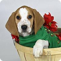 Adopt A Pet :: Cyrus - Joliet, IL