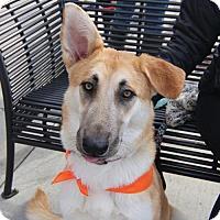 Adopt A Pet :: Katie - Littleton, CO