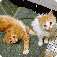 Adopt A Pet :: Scarlett and Skyler - New York, NY