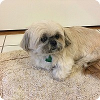 Adopt A Pet :: Angel - MEET ME - Norwalk, CT