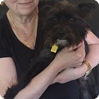 Adopt A Pet :: Randy-On Hold - Warwick, NY
