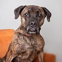 Adopt A Pet :: Donald - Mission Hills, CA