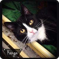 Adopt A Pet :: Kanga - Hartford City, IN