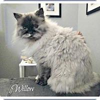 Adopt A Pet :: Willow - Blackstock, ON