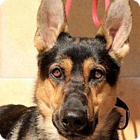 Adopt A Pet :: Ivanhoe - Albuquerque, NM