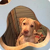 Adopt A Pet :: Mr Big - San Francisco, CA