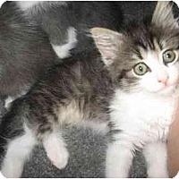 Adopt A Pet :: Stevie - Davis, CA