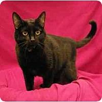 Adopt A Pet :: Amber - Sacramento, CA
