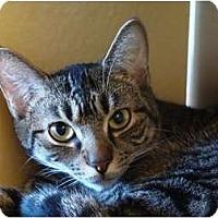 Adopt A Pet :: Matilda - Albany, NY