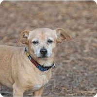 Adopt A Pet :: Paco - Ft. Myers, FL