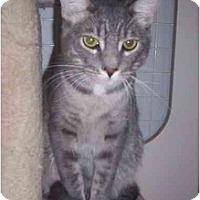 Adopt A Pet :: Leo - St. Louis, MO