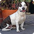 Adopt A Pet :: Joe Sunshine