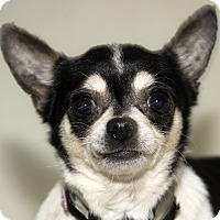 Adopt A Pet :: Pickles - Cumberland, MD