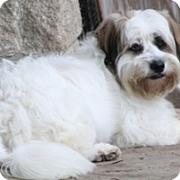 Adopt A Pet :: Tiki - Norwalk, CT