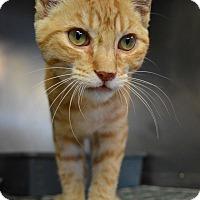 Adopt A Pet :: Pipper - Texarkana, AR