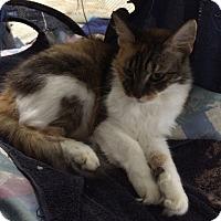 Adopt A Pet :: RoxyRoo - Delray Beach, FL