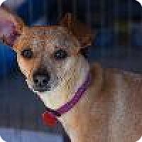 Adopt A Pet :: MARIA - Pt. Richmond, CA