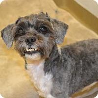 Adopt A Pet :: Haruko - Miami, FL