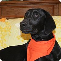 Adopt A Pet :: Athena (HAS BEEN ADOPTED) - Buffalo, NY