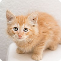 Adopt A Pet :: Clack - Fountain Hills, AZ