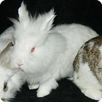 Adopt A Pet :: Zippy - Baton Rouge, LA