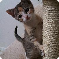 Adopt A Pet :: Magic - Scottsdale, AZ