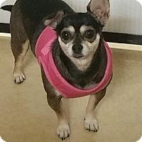 Adopt A Pet :: Suzie Q - Ogden, UT
