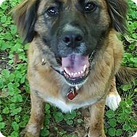 Adopt A Pet :: Hilda - Smithtown, NY