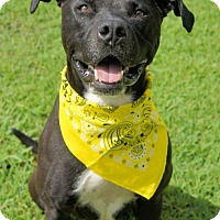 Adopt A Pet :: 1607-1683 Marc - Virginia Beach, VA