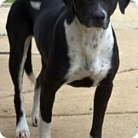 Adopt A Pet :: Shyann - Olive Branch, MS