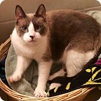 Adopt A Pet :: Kichi - Miramar, FL