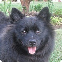 Adopt A Pet :: Frodo - LaGrange, KY