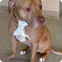 Adopt A Pet :: Java - Troy, OH