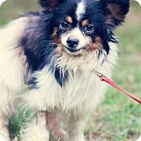 Adopt A Pet :: Trey - Gainesville, FL