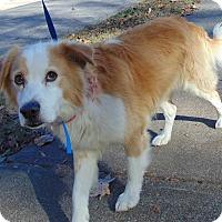 Adopt A Pet :: Boo - Memphis, TN