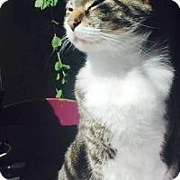 Adopt A Pet :: Road - Novato, CA