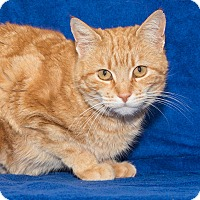 Adopt A Pet :: Lulu - Elmwood Park, NJ