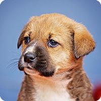 Adopt A Pet :: Camilla - Cincinnati, OH