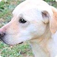 Adopt A Pet :: THOMAS(THROWN AWAY-PLS READ! - Wakefield, RI