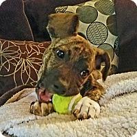 Adopt A Pet :: Kielle - Suwanee, GA
