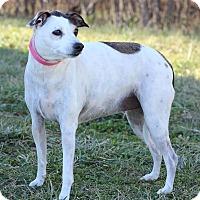 Adopt A Pet :: Maizy - Waldorf, MD