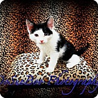 Adopt A Pet :: Keefe - Warren, MI