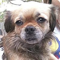Adopt A Pet :: Gorda - Orlando, FL
