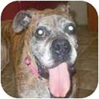 Adopt A Pet :: Otis - Sunderland, MA