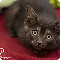 Adopt A Pet :: Bart - Fountain Hills, AZ