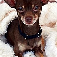 Adopt A Pet :: Snickers-Adoption pending - Bridgeton, MO
