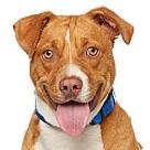 Adopt A Pet :: Mateo