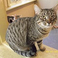 Adopt A Pet :: Carlisle - Live Oak, FL